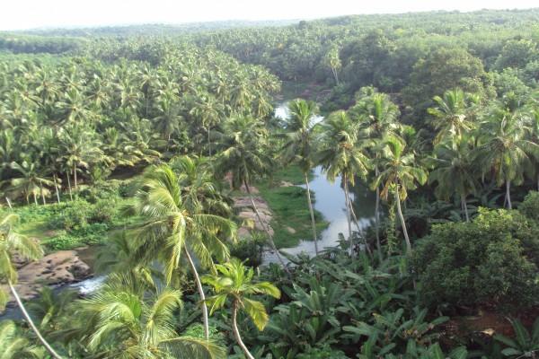Un río entre palmeras