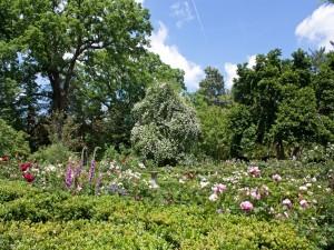 Postal: Un hermoso jardín