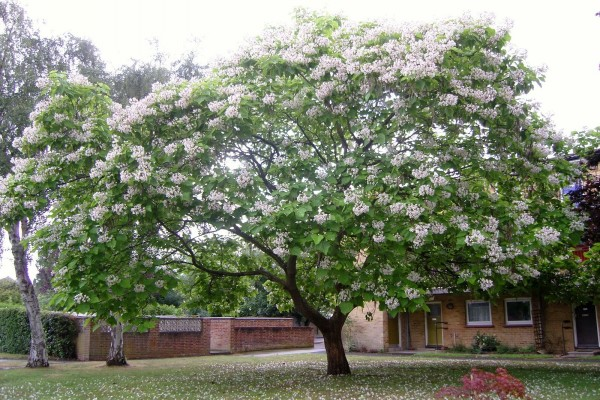 Árbol en flor en un jardín