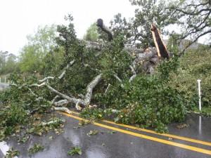 Postal: Un árbol caído sobre una carretera mojada