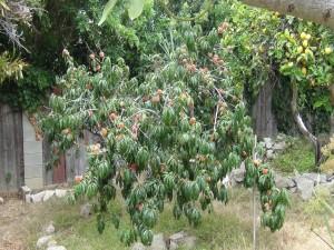 Árboles con melocotones y limones
