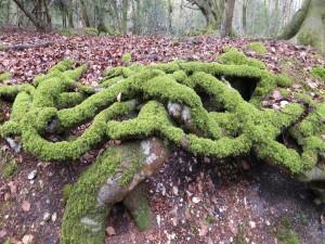 Grande raíces fuera de la tierra