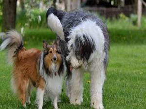 Postal: Dos hermosos perros cultivando la amistad