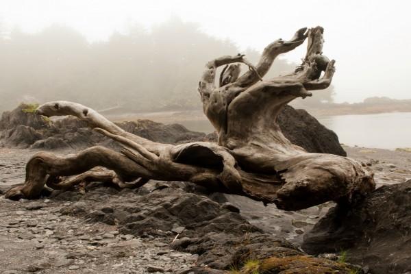 Restos de un árbol con formas curiosas