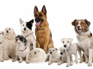 Postal: Varios perros mirando atentamente