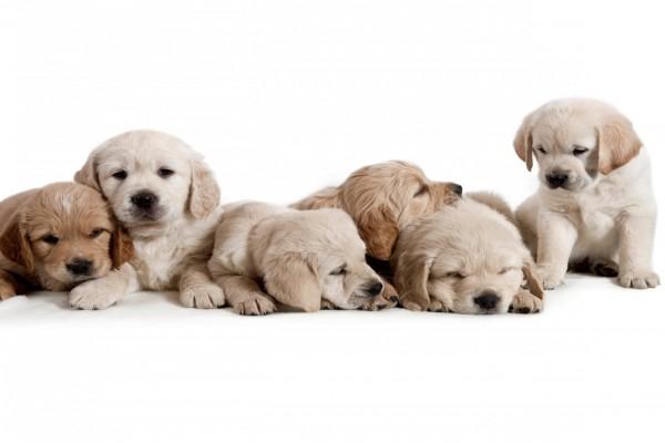 Bellos y tiernos cachorritos