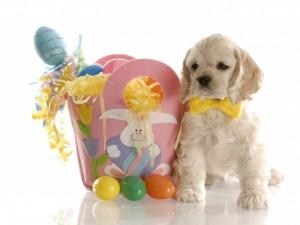 Perro blanco junto a un caja con sorpresas para Pascua