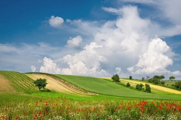Un fabuloso campo sembrado