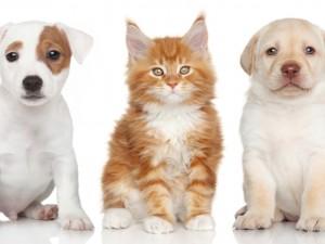 Dos hermosos perros junto a un gatito