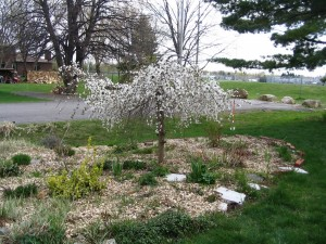 Postal: Árbol con flores en un jardín