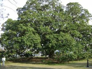 Un hermoso y frondoso árbol