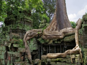 Postal: Un árbol gigante sobre el templo Ta Prohm
