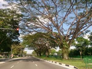 Postal: Árboles junto a una carretera