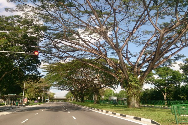 Árboles junto a una carretera