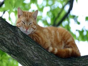 Un gato adormilado en el árbol