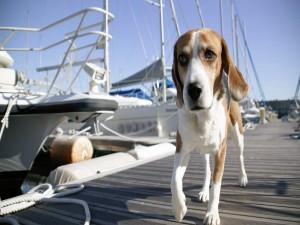 Postal: Un perro paseando por el puerto