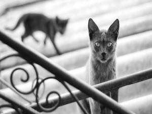 Un gato mirando desde las escaleras