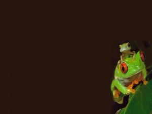 Postal: Ranita encima de una rana