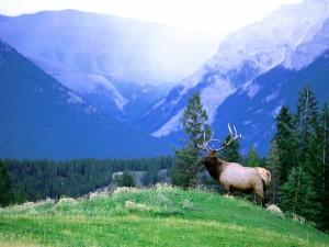 Un gran ciervo quieto sobre la hierba