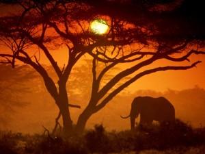 Postal: Elefante visto al atardecer