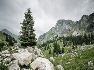 Pinos entre las rocas