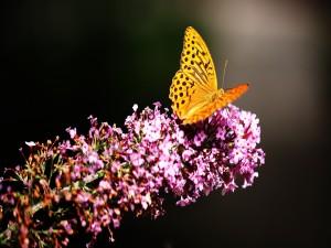 Una bella mariposa amarilla sobre una rama con flores rosas