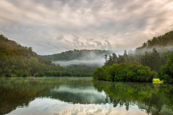 Una mañana con bruma en el río