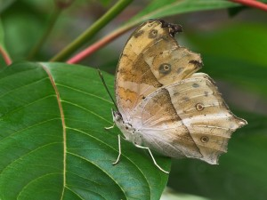Postal: Mariposa sobre una gran hoja verde