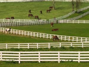 Caballos en un rancho