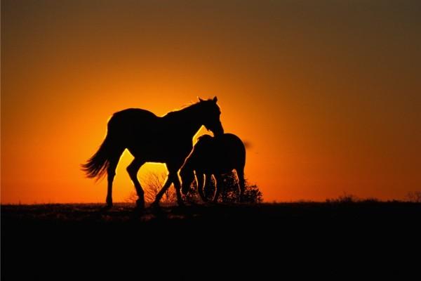 Dos caballos tapando el sol al atardecer