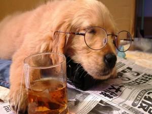Perro dormido sobre el periódico