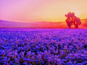 Un gran campo de flores iluminado al amanecer