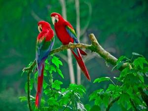 Dos hermosos y vistosos loros sobre una rama