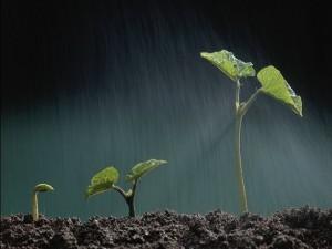 Plantitas bajo un intensa lluvia