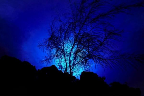 La luz de la luna tras las nubes y un árbol
