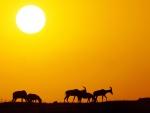 Antílopes caminando en un amanecer dorado