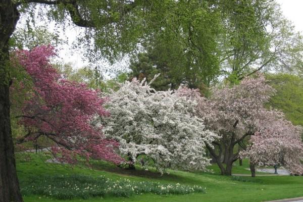 Un parque en primavera