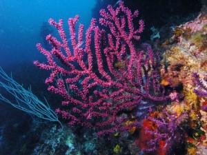 Vistosos corales en las profundidades del mar