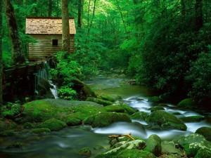 Un refugio en el bosque junto al río