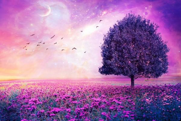 Un bonito campo y cielo color púrpura