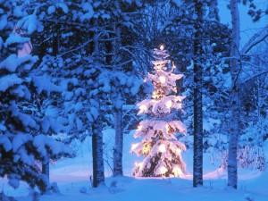 Postal: Un abeto cubierto de nieve e iluminado por Navidad