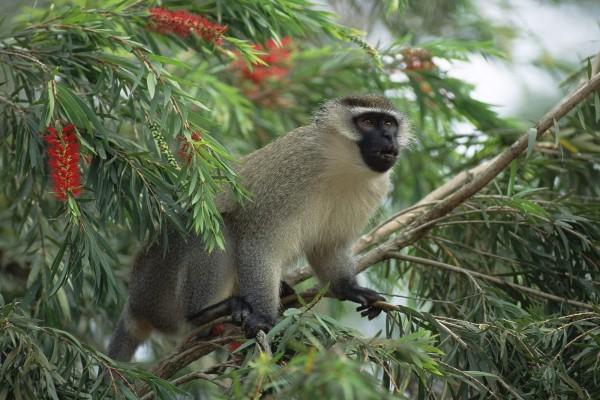 Un mono verde sobre el árbol