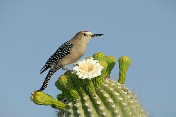 Pájaro sobre un cactus