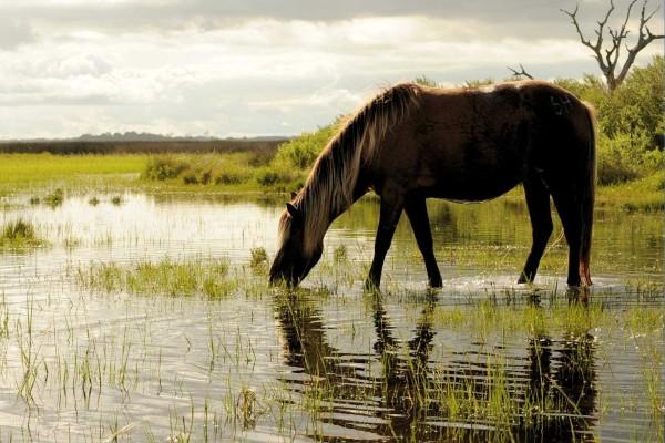 Caballo bebiendo agua en un lago