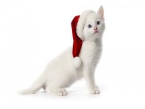 Postal: Gatito blanco con el gorro rojo de Papá Noel