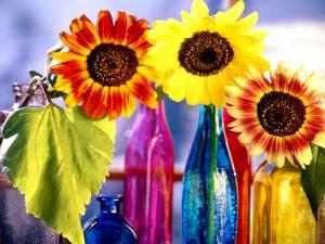 Postal: Girasoles dentro de botellas de colores