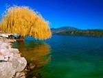 Un árbol con hojas amarillentas junto al lago