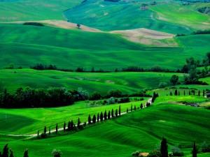 Carretera cruzando unas tierras verdes