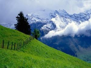 Montañas nevadas vistas desde el prado verde