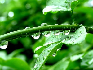 Planta con gotas de lluvia